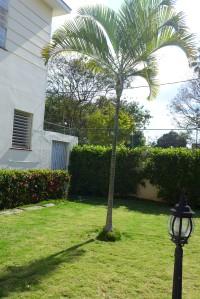 Han plantado una pequeña palma en el jardín de enfrente