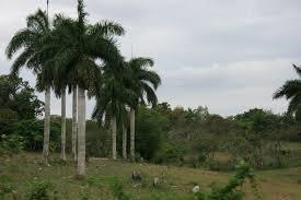 En Matanzas aprendí a amar el campo cubano